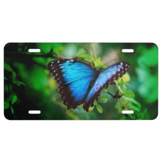 Mariposa azul de Morpho Placa De Matrícula