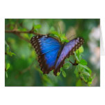 Mariposa azul de Morpho Tarjeta De Felicitación