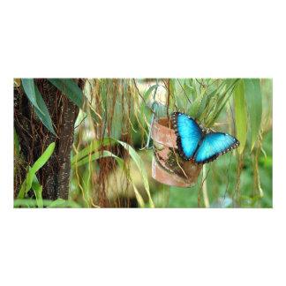 Mariposa azul de Morpho Tarjetas Personales Con Fotos