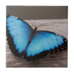 Mariposa azul de Morpho Tejas Cerámicas