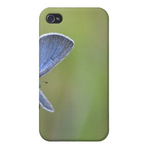 Mariposa azul de plata iPhone 4 carcasa