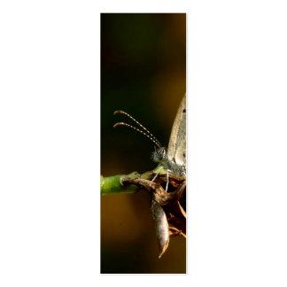 Mariposa azul de Zizula Hylax de la hierba minúscu Tarjeta De Negocio
