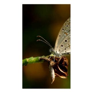 Mariposa azul de Zizula Hylax de la hierba minúscu Tarjetas De Visita