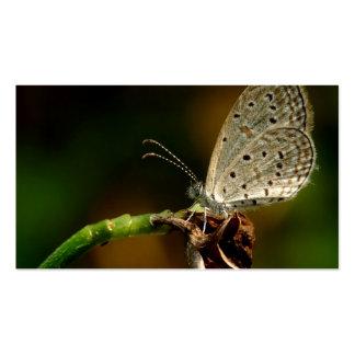 Mariposa azul de Zizula Hylax de la hierba minúscu Plantilla De Tarjeta De Visita