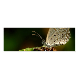 Mariposa azul de Zizula Hylax de la hierba minúscu Tarjetas De Negocios