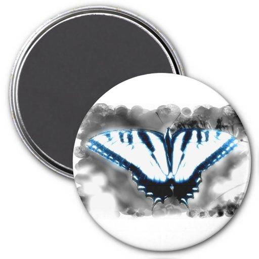 Mariposa azul del choque iman