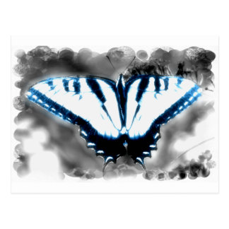 Mariposa azul del choque postal