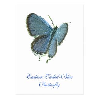 Mariposa azul Del este-Atada Postal