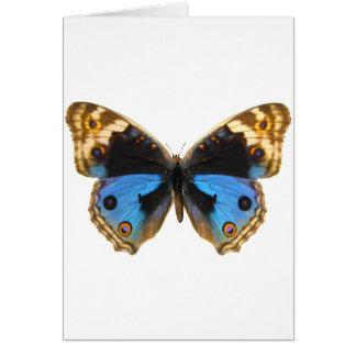 Mariposa azul del pensamiento felicitación