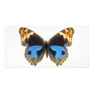 Mariposa azul del pensamiento tarjeta fotografica personalizada