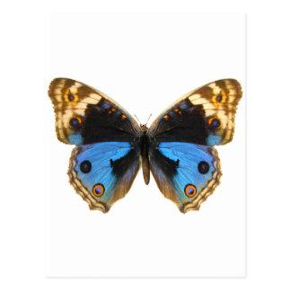 Mariposa azul del pensamiento postal