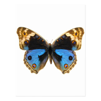 Mariposa azul del pensamiento tarjetas postales