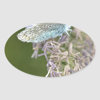 Mariposa azul en la flor pegatina ovalada