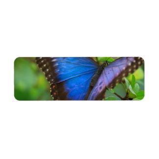 Mariposa azul etiqueta de remite