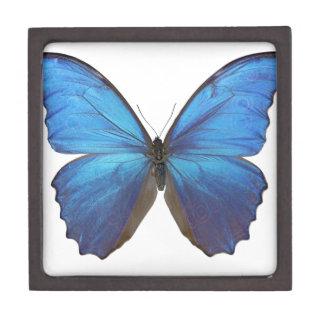 Mariposa azul gigante de Morpho Caja De Recuerdo De Calidad