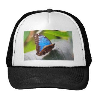 Mariposa azul gorras de camionero
