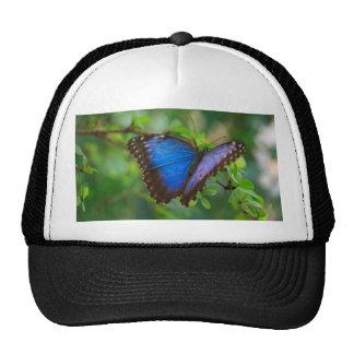 Mariposa azul gorro de camionero