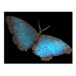 mariposa azul (imagen digital) postal
