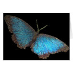 mariposa azul (imagen digital) tarjeta de felicitación