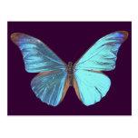 Mariposa azul iridiscente bonita postal