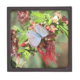 Mariposa azul marina cajas de joyas de calidad