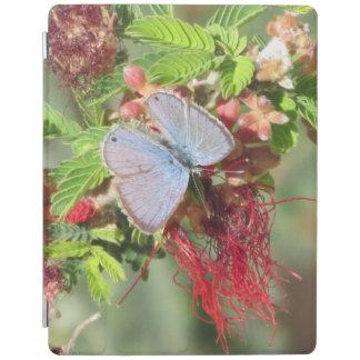 Mariposa azul marina cover de iPad