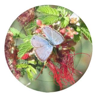 Mariposa azul marina paquete grande de tapa botones