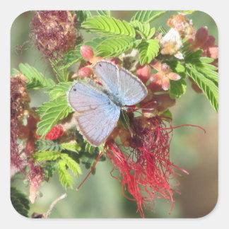 Mariposa azul marina pegatina cuadrada