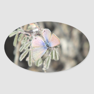 Mariposa azul marina pegatina ovalada