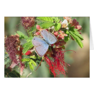 Mariposa azul marina tarjeta pequeña
