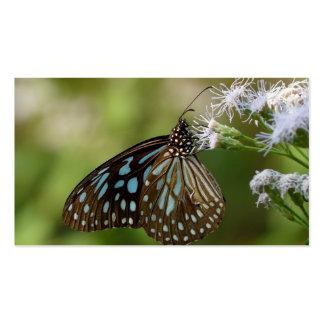 Mariposa azul marino del tigre Tirumala Septentri Plantillas De Tarjeta De Negocio
