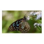 Mariposa azul marino del tigre (Tirumala Tarjetas De Visita