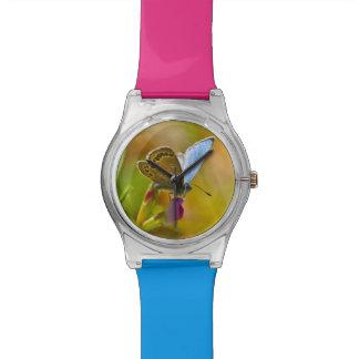 Mariposa azul minúscula en el reloj del Wildflower