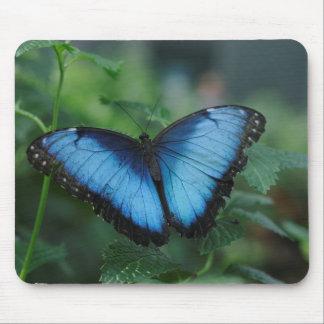 Mariposa azul Mousepad