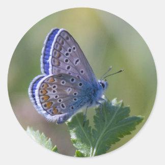 mariposa azul pegatina redonda