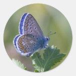 mariposa azul pegatinas redondas