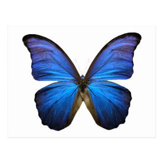 mariposa azul postales