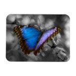 Mariposa azul púrpura iman rectangular