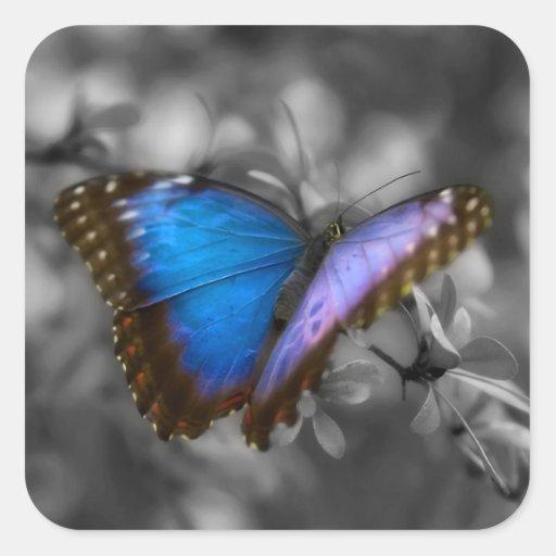 Mariposa azul púrpura colcomanias cuadradas