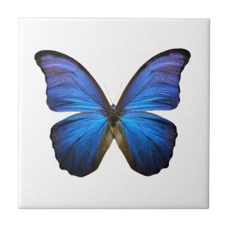Mariposa azul radiante azulejo cuadrado pequeño