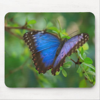 Mariposa azul tapete de ratones