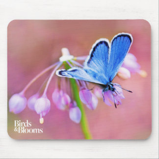Mariposa azul mousepads