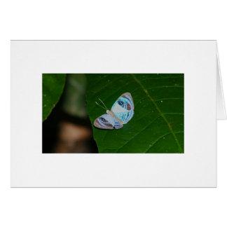 Mariposa azul tarjeta de felicitación
