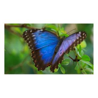 Mariposa azul tarjetas de visita
