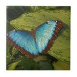 Mariposa azul tejas