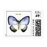 Mariposa: Azul Verde-Congregado