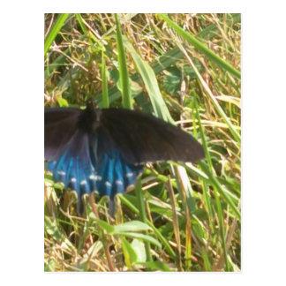 mariposa azul y negra tarjeta postal
