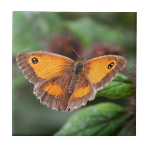 Mariposa Azulejo Cuadrado Pequeño