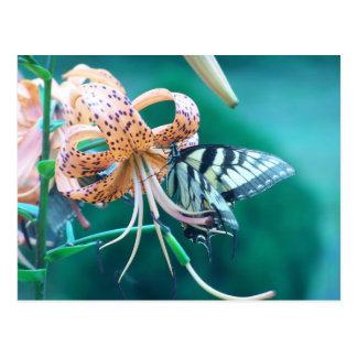 Mariposa azulverde postal