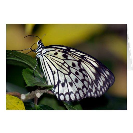 Mariposa blanca de la ninfa del árbol felicitacion